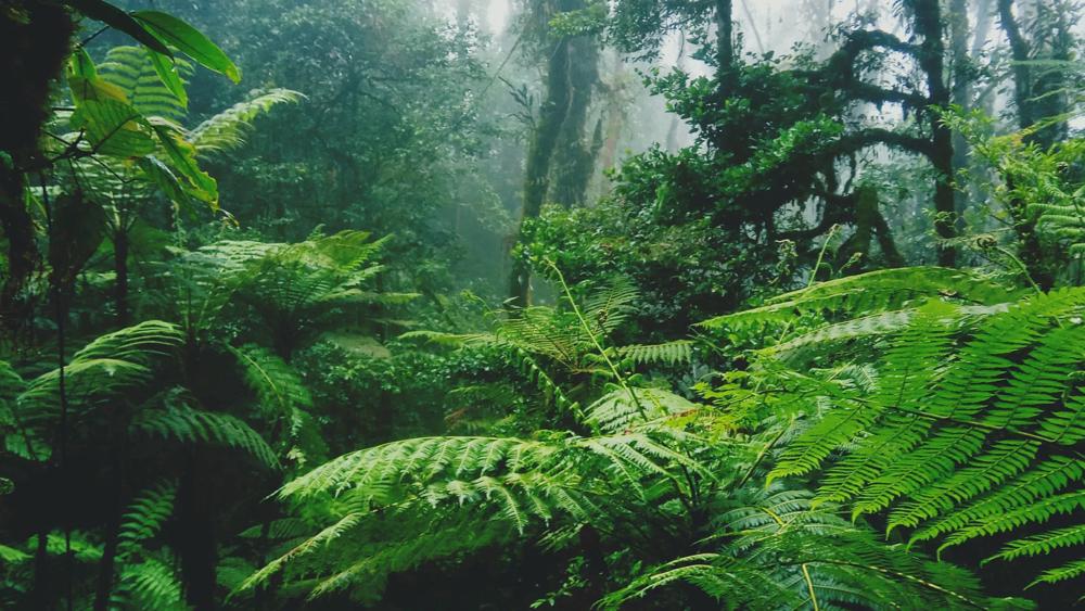 Umwelt liegt Pandinavia am Herzen. Grüner Wald